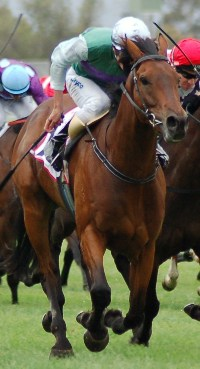 2010 Adelaide Casino Adelaide Cup Winner - Capecover (NZ). Lyndelle Connor Photography.